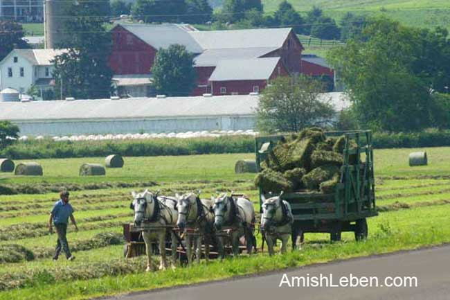 Amish Leben Life in Amish Country