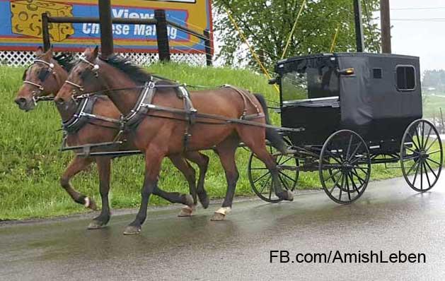 Amish Leben Facebook Page